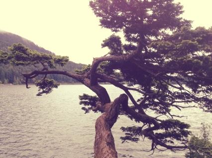 Overlooking Cascade Lake on Orcas island